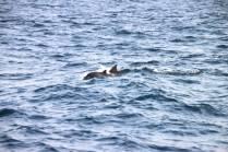 Dolphins Photo credit: Sarah Gardner