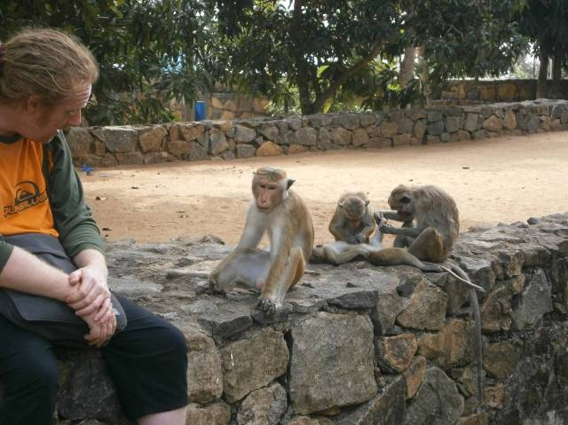 P2100897 monkeys