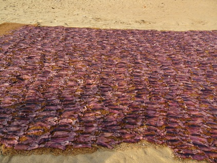 Squid drying on the beach in Negombo